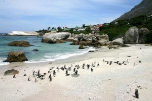 Пингвини на плаж