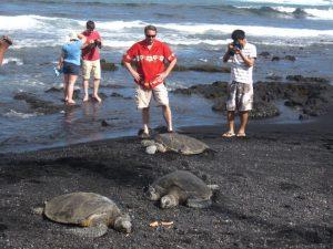 Костенурки на плаж